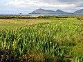 Marshy-Boggy Land near Ballyferriter - geograph.org.uk - 16950.jpg