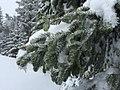 Marys Peak (24998048323).jpg