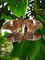 Mating butterflies.jpg