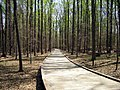 Matthew Henson Trail-12.jpg