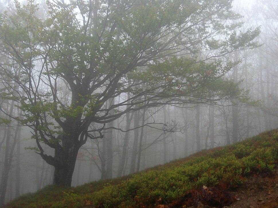 Medvednik - zapadna Srbija - Na putu ka Zelenom Viru - Novembarska magla na planini 1
