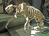 Jefferson's ground sloth