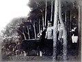 Meiji tenno5.jpg