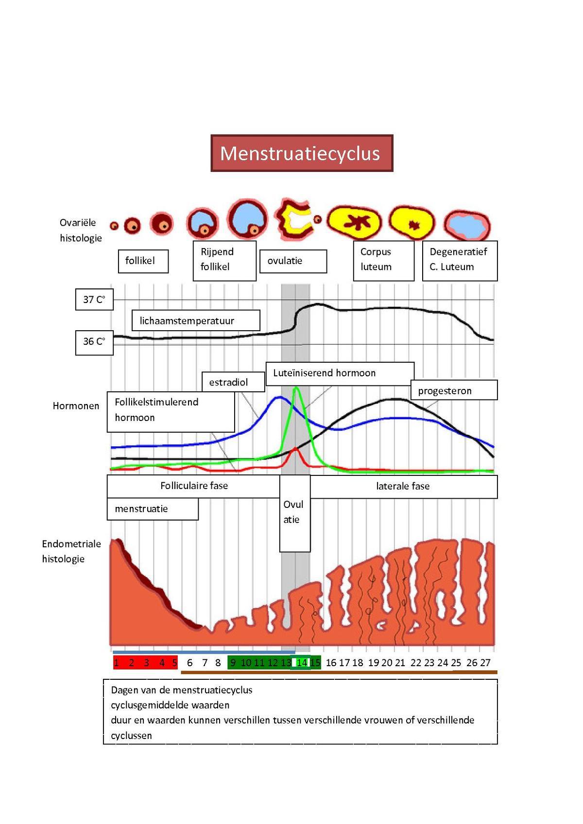 Menstruatiecyclus Wikipedia