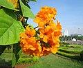 Merdeka Square Flower.JPG