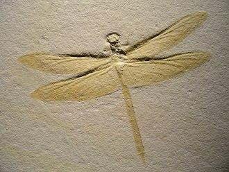 Dragonfly - Mesurupetala, Late Jurassic (Tithonian), Solnhofen limestone, Germany