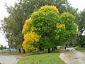Mezhyrich, Rivnens'ka oblast, Ukraine, 35808 - panoramio.jpg