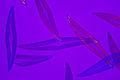 Mikrofoto.de-Pleurosigma angulatum-13.jpg