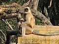 Monkey at the sanctuary.jpg