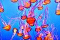 Monterey Bay Aquarium, Monterey, United States (Unsplash HNem8j1jpcE).jpg