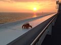 Morning on the Stena Hollandica (11355066974).jpg