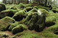 Moss covered rocks, Beddgelert Forest - geograph.org.uk - 542866.jpg