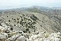 Mount Zas, Naxos, oaks, 101957.jpg