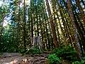 Mt. Baker-Snoqualmie National Forest (9290036339).jpg