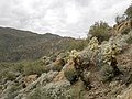 Mt. Pinter Base Loop, Tonto National Forest, Butcher Jones Trail, Fort McDowell, AZ 85264, USA - panoramio (112).jpg