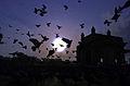 Mumbai Gateway at Sunrise.jpg