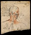 Muscles of the head and neck; écorch ́figure seen from Wellcome V0008248.jpg