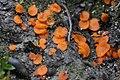 Mushroom (35870738166).jpg