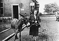 Nő és szamár, 1952 Fortepan 22345.jpg