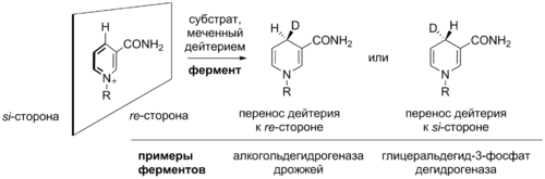 NAD-mediated oxidations stereochemistry.png