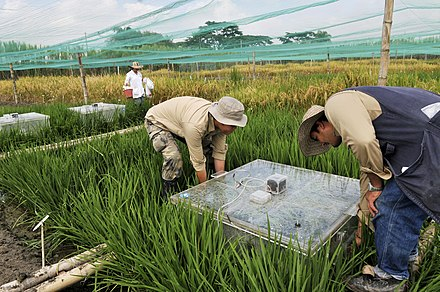 water saving rice production systems - HD4288×2848