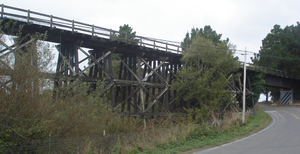 Northwestern Pacific Railroad - Vegetation encroaches on Swauger Creek trestle near Loleta.