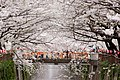 Nakameguro 2009-04-05 (3449275004).jpg