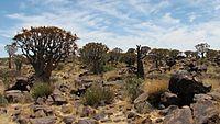 Namibia-061018 124304.jpg
