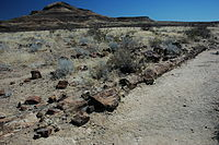 Namibie Petrified Forest 01.JPG