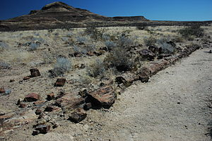 Petrified forest, Khorixas - Large petrified tree trunk