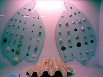 Bangladesh National Museum - Image: National Museum Dhaka 2