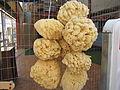 Natural Sponge IMG 6289.JPG