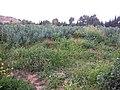 Nature des Monts Beni Chougranes Mohammadia 35.jpg