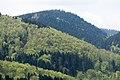 Naturpark Thüringer Wald.Blick vom Reinhardsberg.05.ajb.jpg