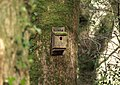 Nesting box, Woodash - geograph.org.uk - 742676.jpg