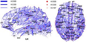 Hub (network science) - Image: Network representation of brain connectivity