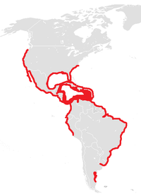 Range of T. maximus