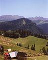 Nosal, Koszysta, Zolta Turnia z Antalowki, lipiec 1995.jpg