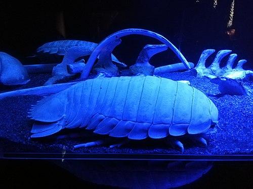 Numazu Deepblue Aquarium 20200816 12.jpg