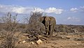 Nw 9500 elefanthanne i Balule JF.jpg