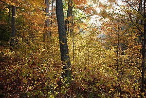 Interior Low Plateaus - Image: Oak woodland Hoosier National Forest
