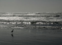 Ocean beach at low tide against the sun.jpg