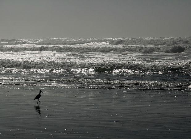 Ocean beach at low tide against the sun.jpg