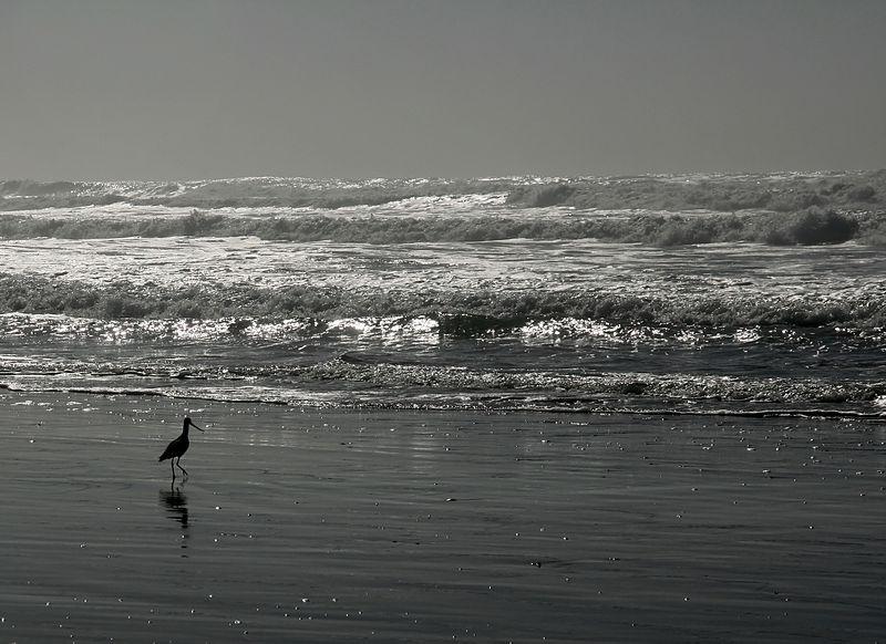 File:Ocean beach at low tide against the sun.jpg