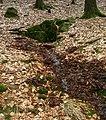 Odenwald - Quelle Hahnengraben 2013-03-10 16-31-00.JPG