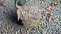 Old fireproof brick of Asbestos - panoramio.jpg