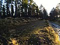 Old railway platform at Lynmore Wood - panoramio.jpg