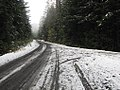Olympic National Forest - November 2017 - 4.jpg