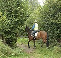 Opening a gate with a horse - geograph.org.uk - 1507359.jpg