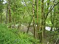 Orcheton Wood - geograph.org.uk - 16750.jpg